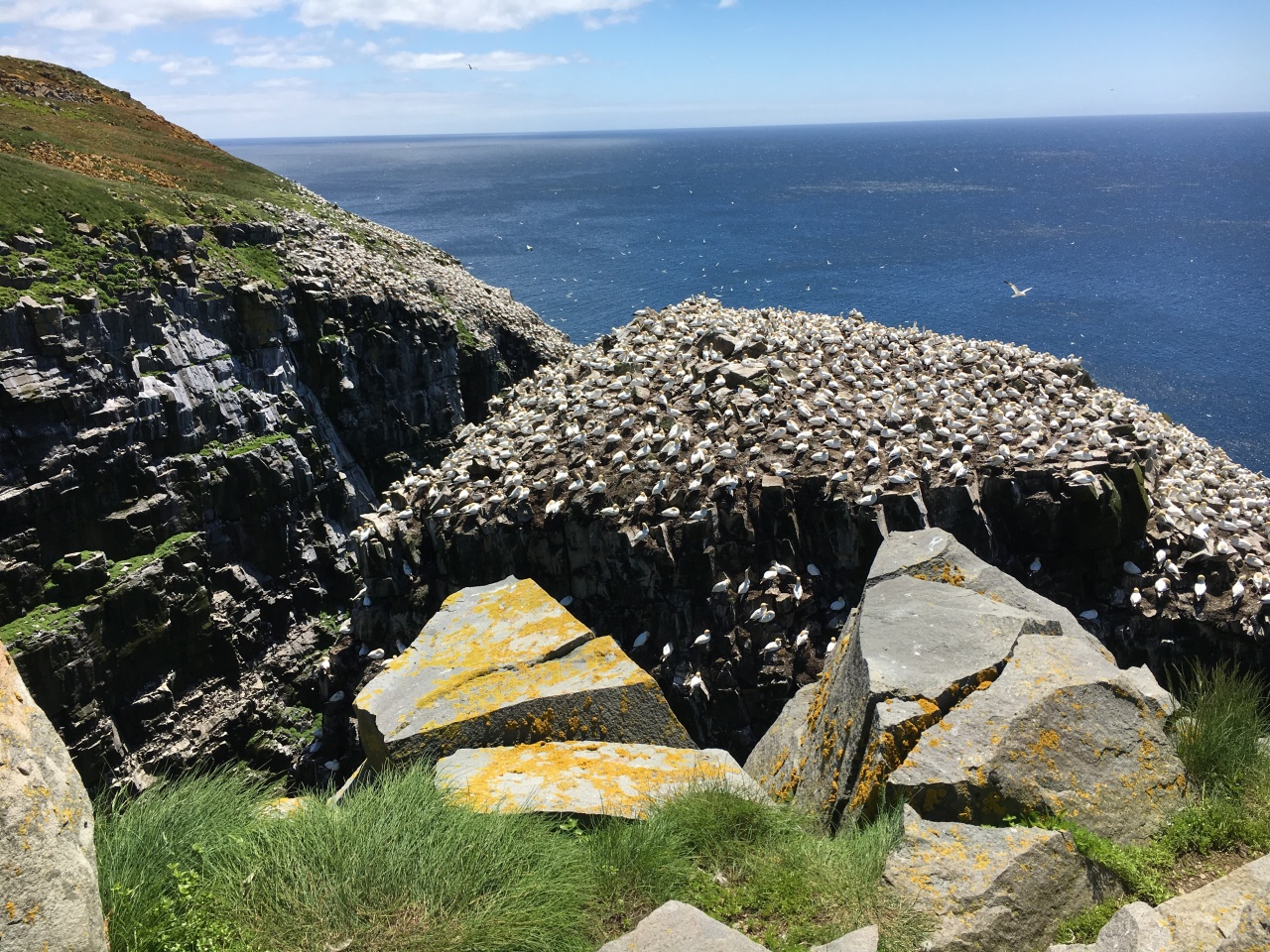 The Seabirds of St. Mary's Cove