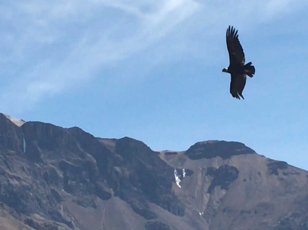 The Gift of a Condor